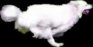 white dog164
