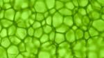 Chlorophyll 230x129