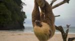 sloth230x128
