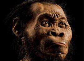 new-species-africa
