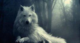 white-wolf270